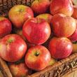 Sweet Sixteen Apple Tree