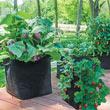 Grow Tub<sup>®</sup> 15 Gallon Garden Container