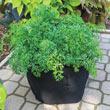 Grow Tub<sup>®</sup> 10 Gallon Garden Container