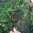 Premium Bird Nettings - Plant Protection