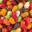 Flamethrower Mix Hybrid Hot Pepper