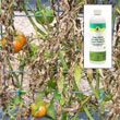 Soap-Shield<sup>®</sup> Flowable Liquid Copper Fungicide