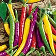 Carnivale Cayenne Blend Hot Pepper