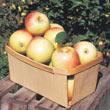 Sundance™ Apple Tree
