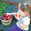 Pixie Crunch<sup>®</sup> Apple Tree