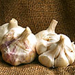 Inchelium Red Softneck Garlic