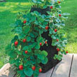 Grow Tub<sup>®</sup> Strawberry Tower™ - Garden Container
