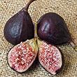 Violette de Bordeaux Fig Tree