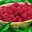 Encore Raspberry