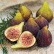 Fantasia™ Fig Tree