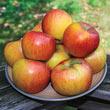 Rubinette Apple Tree