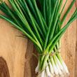 Evergreen White Bunching Onion Seed