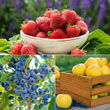 WOW!<sup>™</sup> Fruit