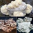 Table Top Farm<sup>™</sup> Mushroom Kits