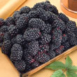 Black Magic™ Blackberry Plant