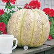 Gurney's<sup>®</sup> Giant Improved Hybrid Cantaloupe Seed