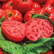 Gurney's<sup>®</sup> Ruby Monster Hybrid Tomato