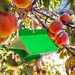 Peach Tree Borer Lure & Trap