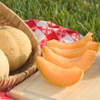 Gurney's<sup>®</sup> Li'l Sweet Improved Hybrid Cantaloupe Seed