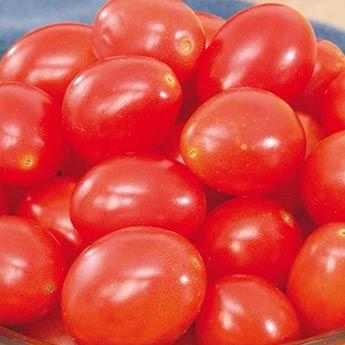 Gurney's<sup>®</sup> Baby Girls Hybrid Tomato