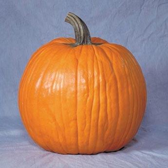 Gurney's<sup>®</sup> Giant Magic Hybrid Pumpkin