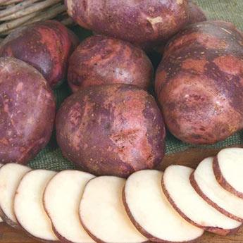 Purple Viking Potato</