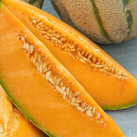Portento Hybrid Tuscan Melon