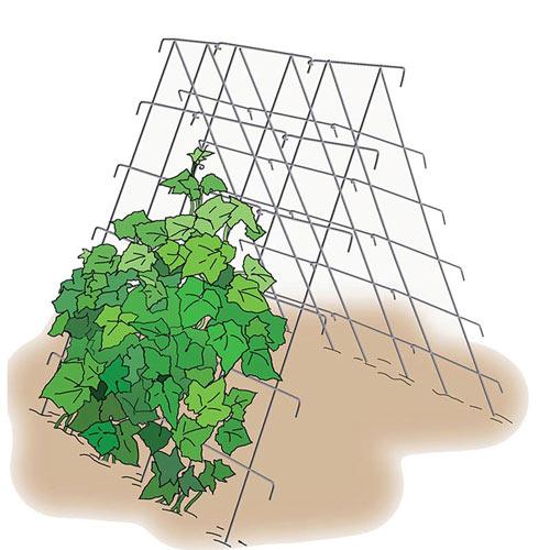 Cucumber Support - Vegetable Trellis