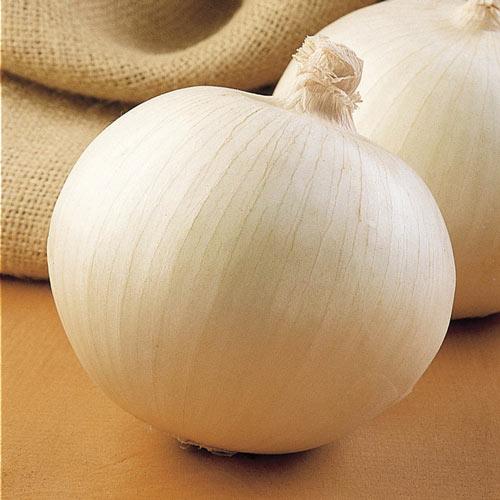 Superstar Hybrid Onion