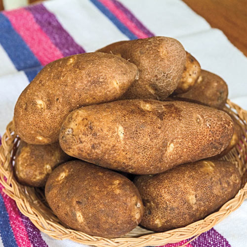 Canela Russet Potato - PVP Certified