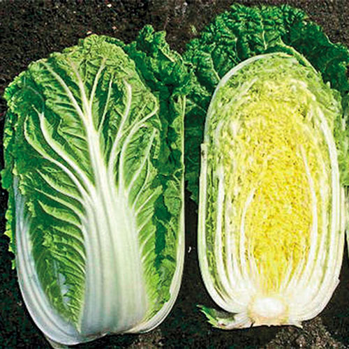China Star Hybrid Cabbage Seed