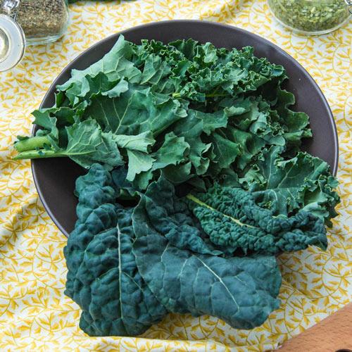 Gurney's<sup>®</sup> Winter Wonderland Mixed Kale Seed