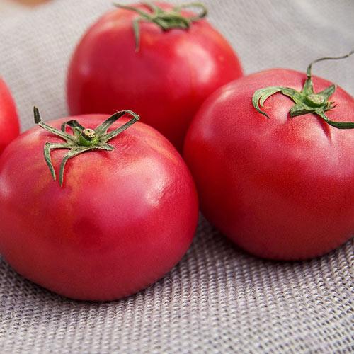 Arkansas Traveller Tomato