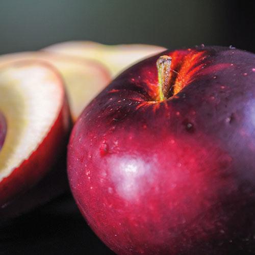 Arkansas Black Apple Tree