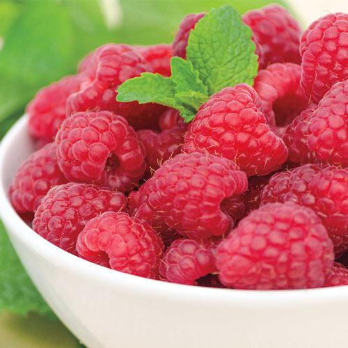 Taylor Summer Bearing Raspberry Plant