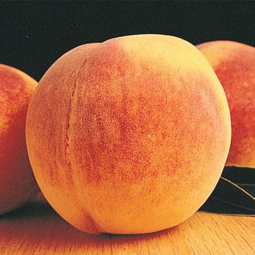 Reliance Peach Tree