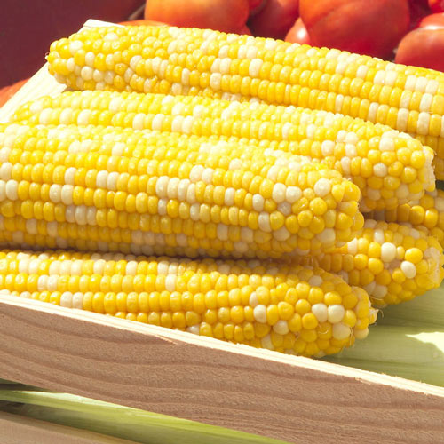 Delectable Hybrid (se) Sweet Corn Seed