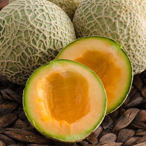 Sugar Cube Hybrid Melon Seed