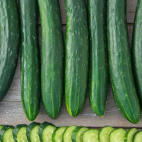 Tasty Green Hybrid Slicing Cucumber Seed
