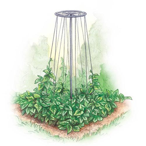 Bean Tower - Plant Trellis