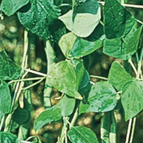 Nylon Vegetable Trellis