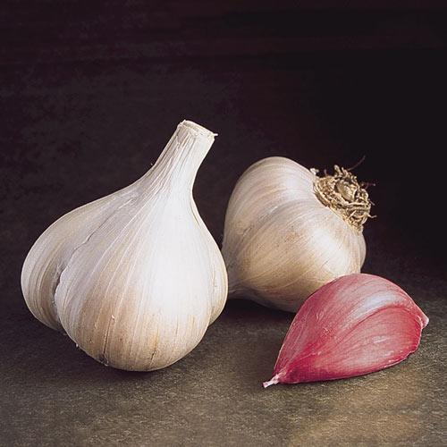 Walla Walla Early Garlic