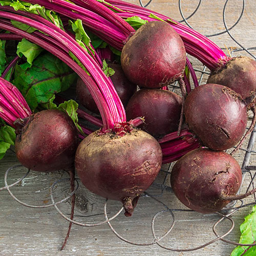 Perfected Detroit Beet Seed