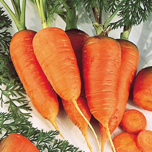 Scarlet Nantes Carrot Seed