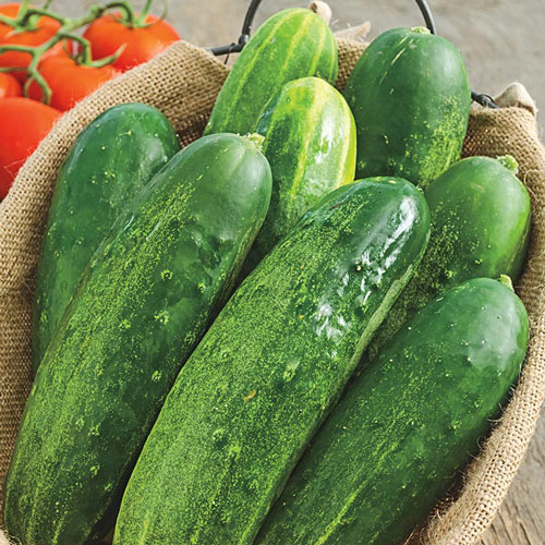 Straight Eight Slicing Cucumber Seed