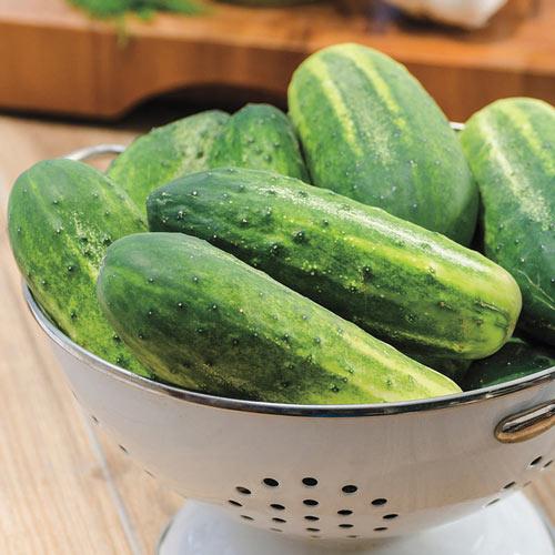 Miss Pickler Hybrid Pickling Cucumber Seed