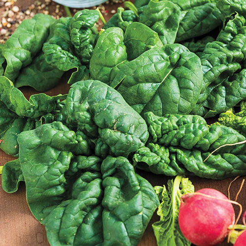 Bloomsdale Longstanding Spinach Seed