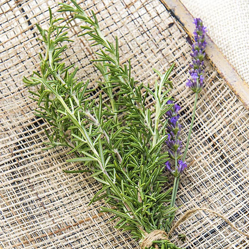 Rosemary Herb Seed