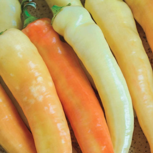 Sweet Banana Sweet Pepper