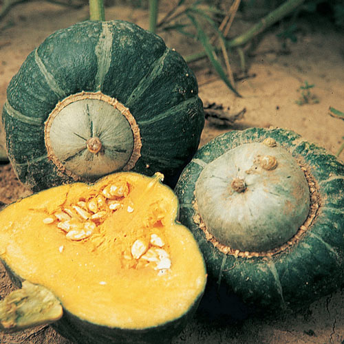 Buttercup Winter Squash Seed